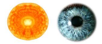occhio carota