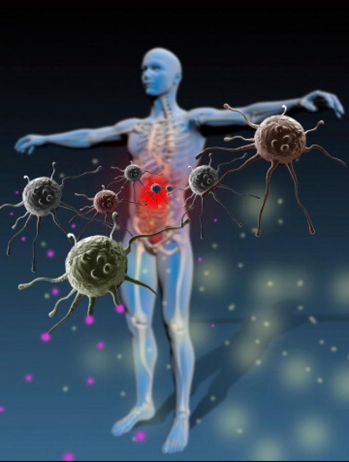 sistema immunitario 2