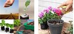 semina ortaggi conc fiori
