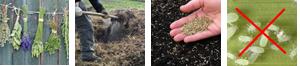 racc erbe concim sem cerea paras